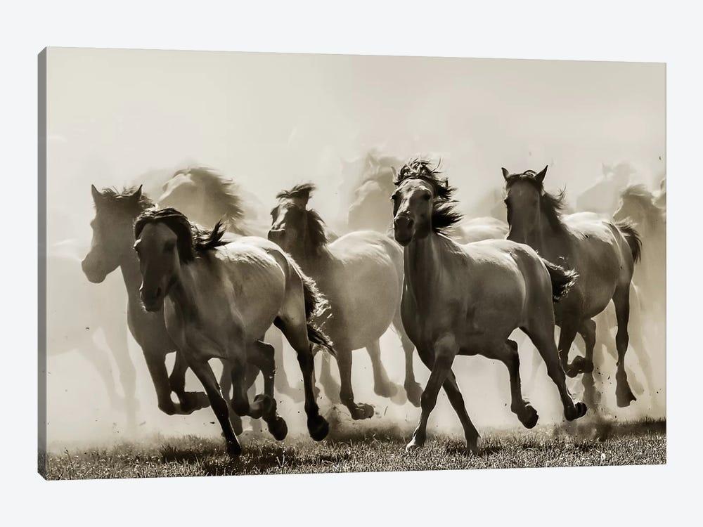 Horse by Heidi Bartsch 1-piece Art Print