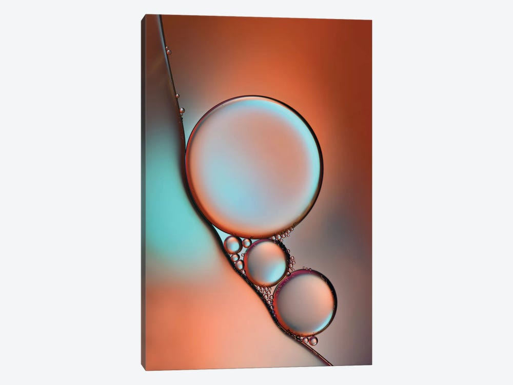 Glimmer by Heidi Westum 1-piece Canvas Wall Art