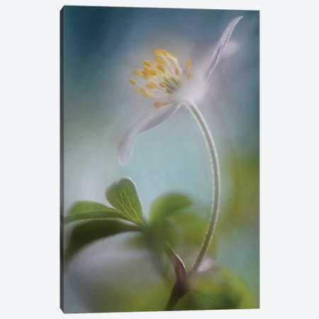 Springtime Canvas Print #OXM1487} by Heidi Westum Canvas Art Print