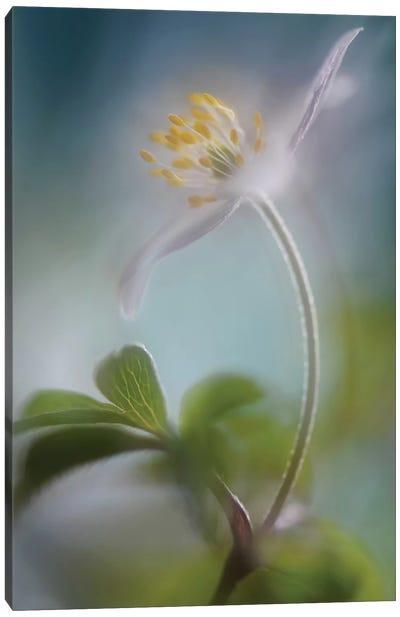 Springtime Canvas Art Print