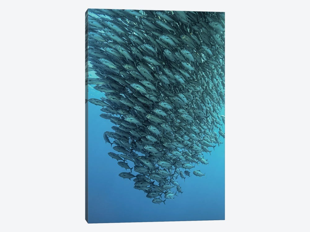 Schooling Jackfishes by Henry Jager 1-piece Canvas Art