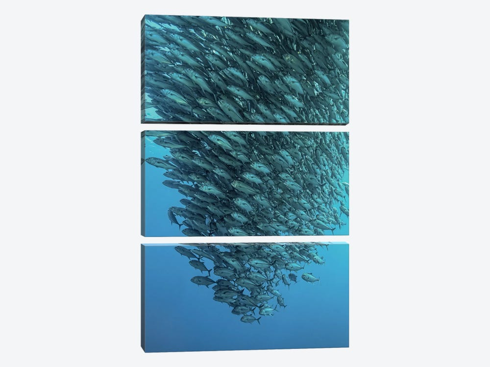 Schooling Jackfishes by Henry Jager 3-piece Canvas Wall Art