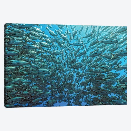 Splitted School Of Jackfish Canvas Print #OXM1506} by Henry Jager Canvas Artwork