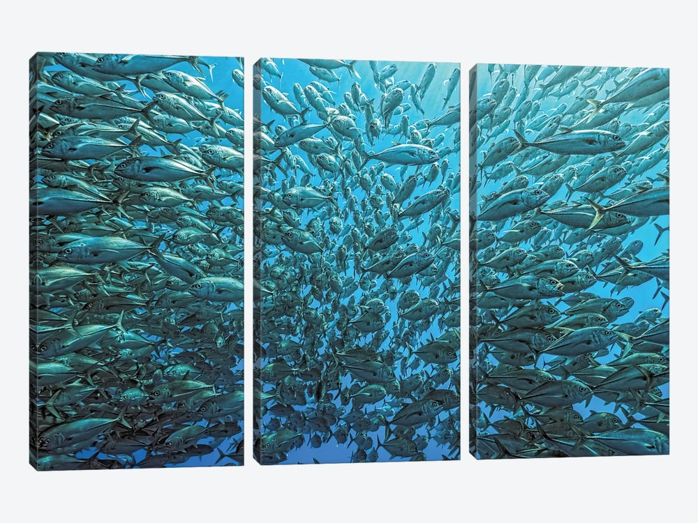 Splitted School Of Jackfish by Henry Jager 3-piece Art Print