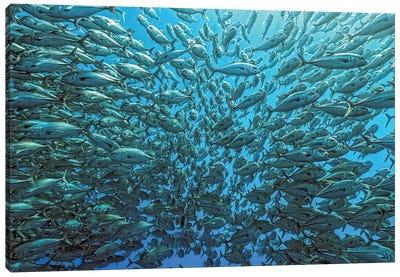 Splitted School Of Jackfish Canvas Art Print