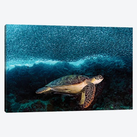Turtle And Sardines Canvas Print #OXM1507} by Henry Jager Canvas Art