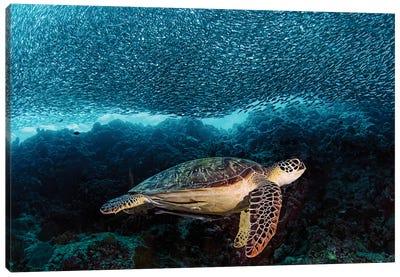 Turtle And Sardines Canvas Art Print