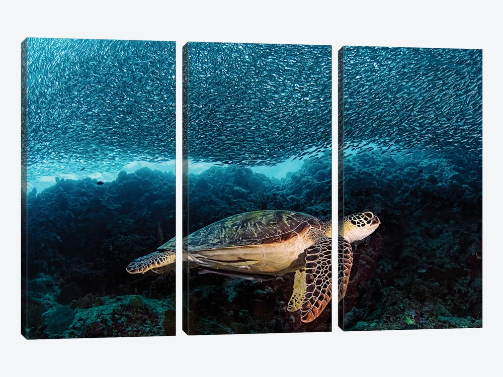 Turtle And Sardines by Henry Jager 3-piece Canvas Art