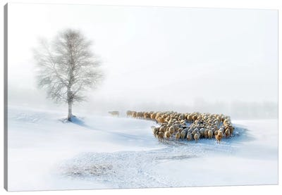 In Snow Canvas Art Print