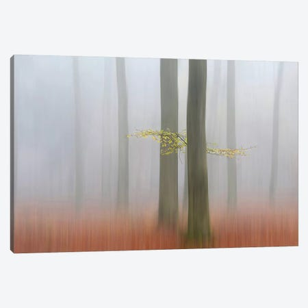 Autumn Morning Canvas Print #OXM1519} by Huib Limberg Canvas Wall Art