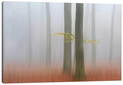 Autumn Morning Canvas Art Print