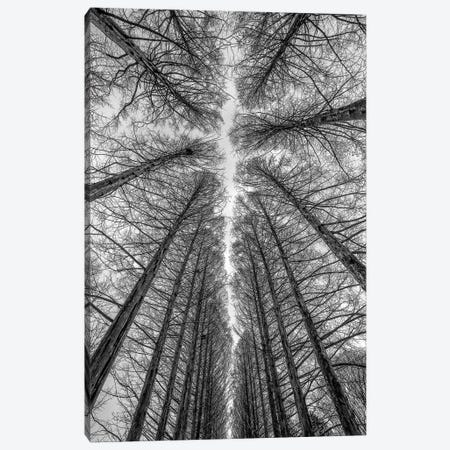 The Road Canvas Print #OXM151} by Ronni Santoso Canvas Art