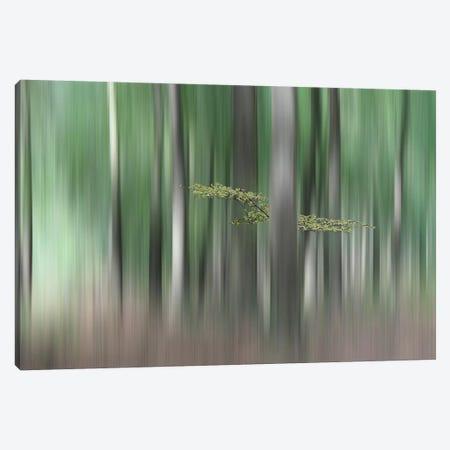 Summer Morning Canvas Print #OXM1523} by Huib Limberg Canvas Art Print