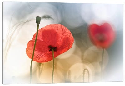 Morning Poppies Canvas Art Print