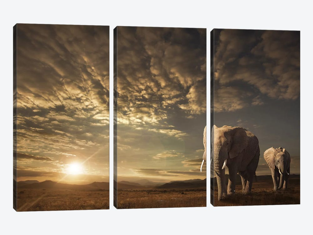 Walking In Savannah by Jackson Carvalho 3-piece Canvas Art