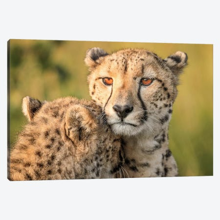Cheetah Eyes Canvas Print #OXM1546} by Jaco Marx Canvas Art