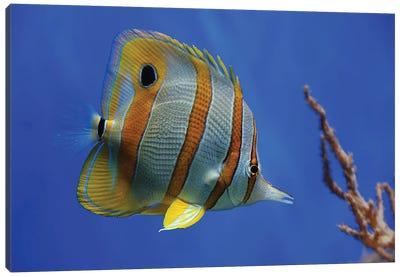 Tropical Beauty Canvas Art Print