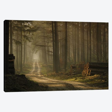 A Forest Walk Canvas Print #OXM1562} by Jan Paul Kraaij Canvas Print
