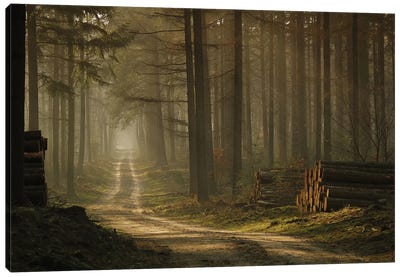 A Forest Walk Canvas Art Print