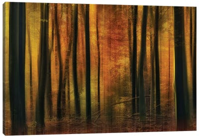 Autumn Falls Canvas Art Print