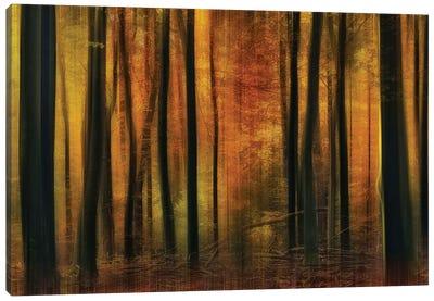 Autumn Falls Canvas Art Print