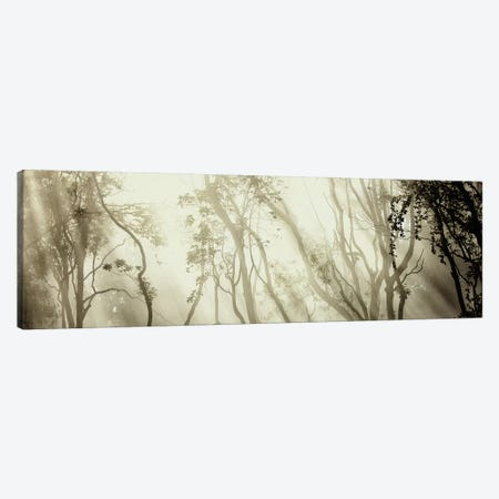Fog Canvas Print #OXM1613} by Jorge Feteira Art Print