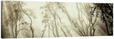 Fog Canvas Print #OXM1613