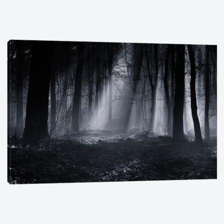 Capela Forest Canvas Print #OXM1632} by Julien Oncete Canvas Art Print