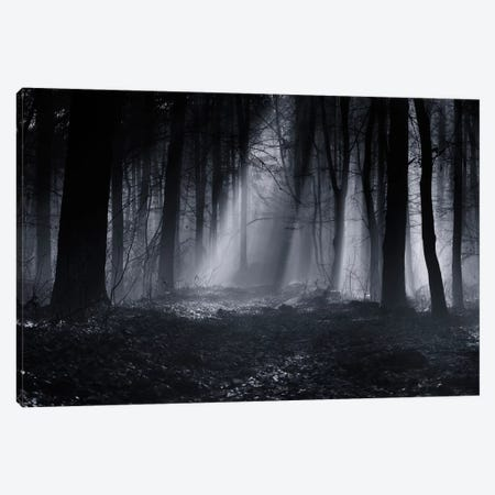 Capela Forest Canvas Print #OXM1632} by Julien Oncete Canvas Art Print