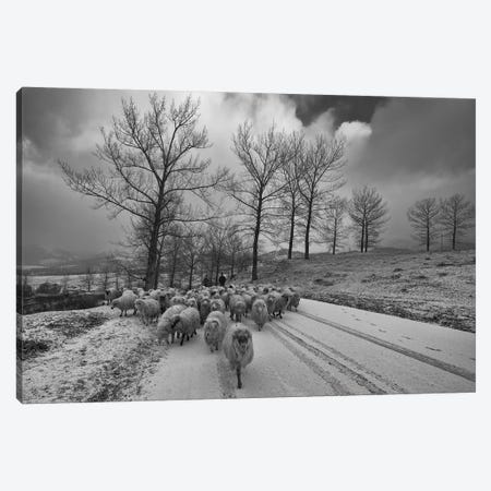 Pastoral Canvas Print #OXM1634} by Julien Oncete Canvas Wall Art