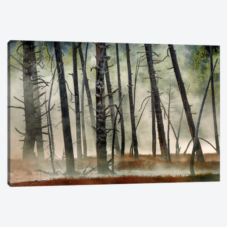 Dead Wood Canvas Print #OXM1637} by Jure Kravanja Canvas Art
