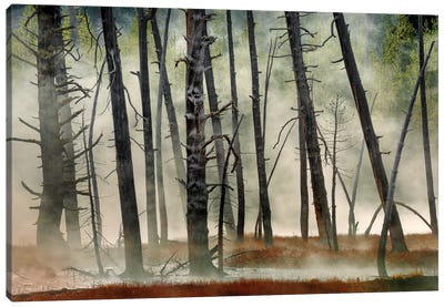 Dead Wood Canvas Art Print