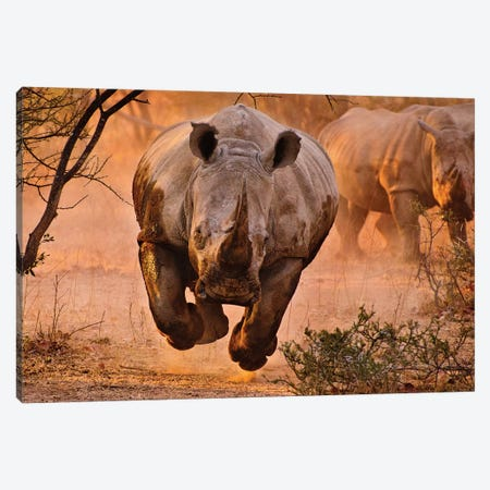 Rhino Learning To Fly Canvas Print #OXM1641} by Justus Vermaak Canvas Artwork
