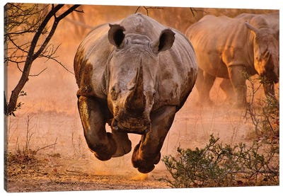 Rhino Learning To Fly Canvas Art Print
