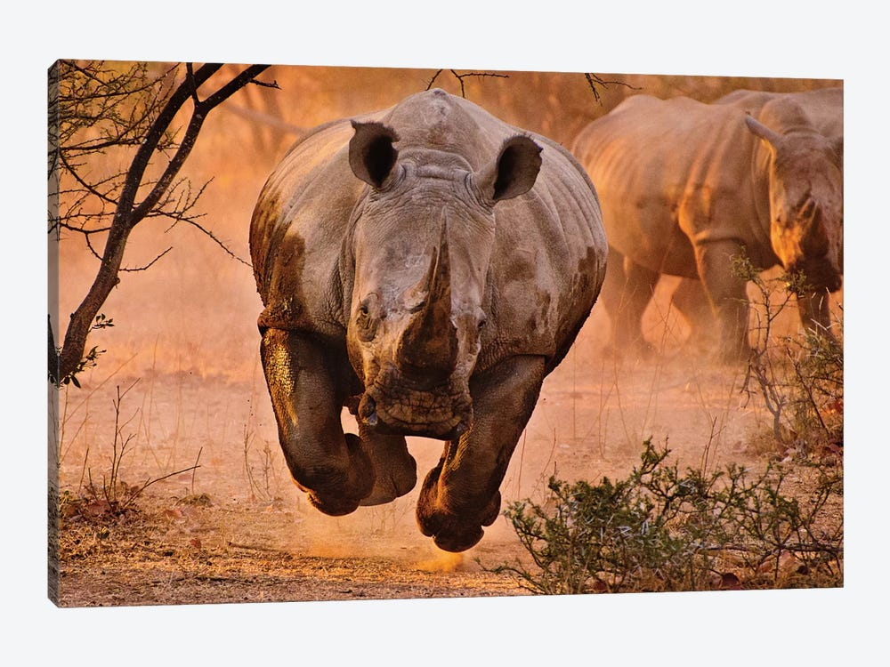 Rhino Learning To Fly by Justus Vermaak 1-piece Canvas Artwork