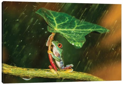 Ohh Noo … It's Raining Canvas Art Print