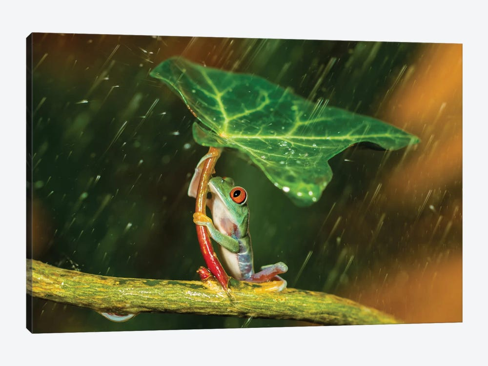 Ohh Noo … It's Raining by Kutub Uddin 1-piece Canvas Wall Art