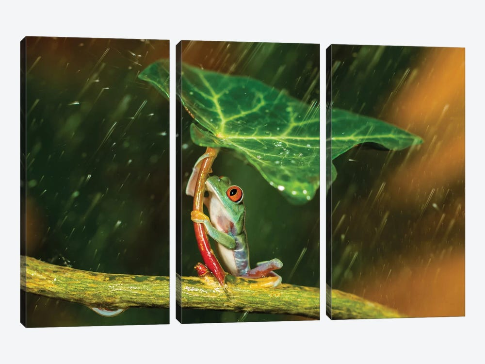 Ohh Noo … It's Raining by Kutub Uddin 3-piece Canvas Artwork