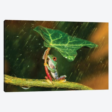 Ohh Noo … It's Raining Canvas Print #OXM1678} by Kutub Uddin Canvas Print
