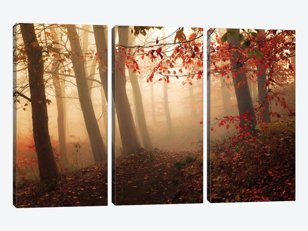 Towards The Light by Leif Løndal 3-piece Canvas Artwork