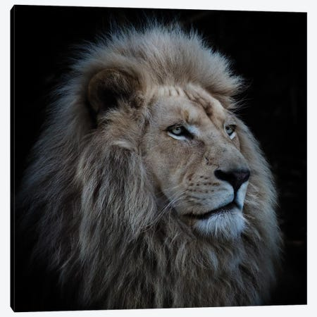 Proud Lion Canvas Print #OXM1707} by Louise Wolbers Canvas Artwork