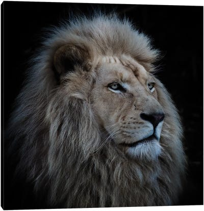 Proud Lion Canvas Art Print