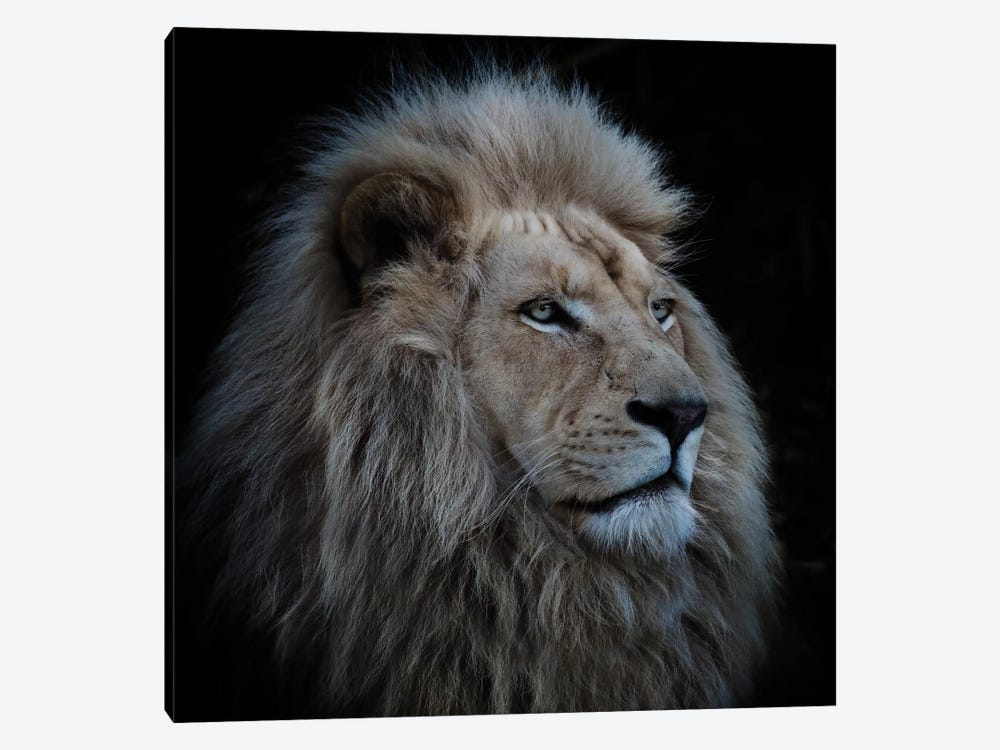 Proud Lion by Louise Wolbers 1-piece Canvas Art Print