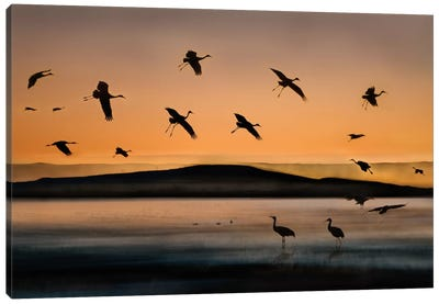 Fly-in At Sunset Canvas Art Print