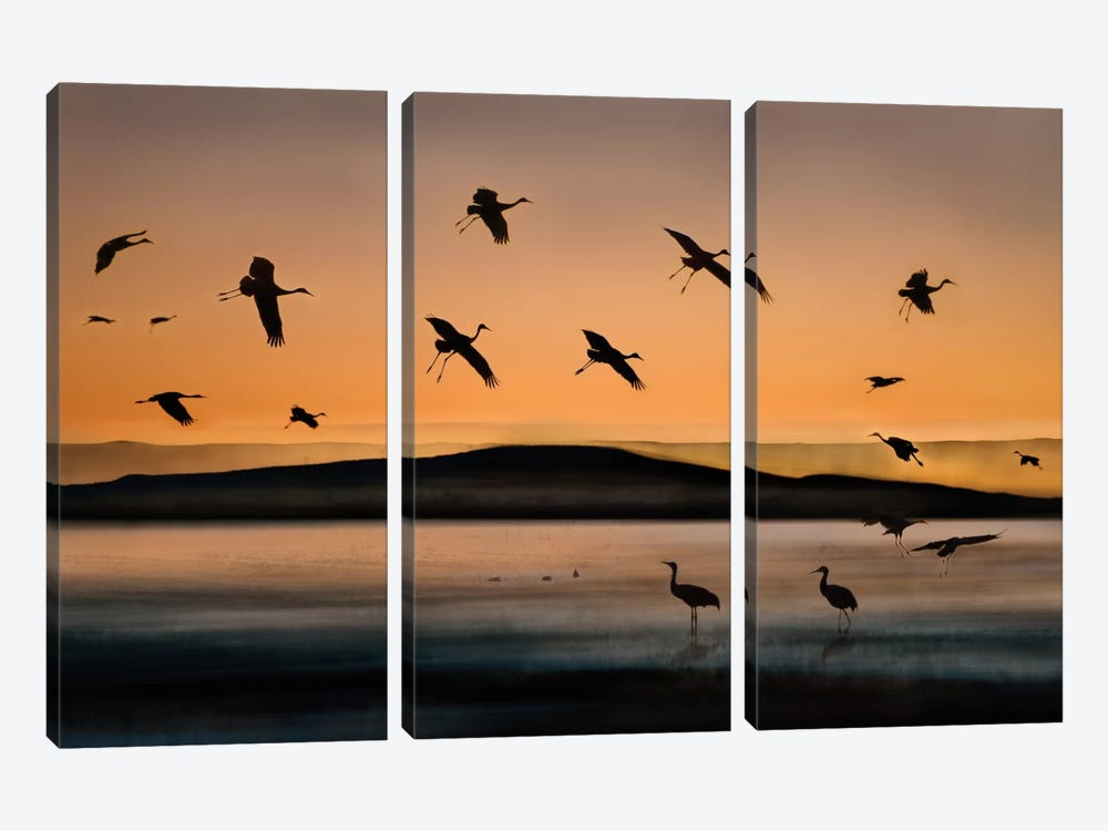 Fly-in At Sunset by Shenshen Dou 3-piece Canvas Art Print