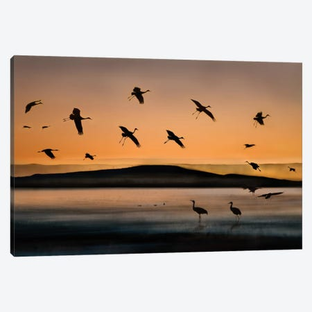 Fly-in At Sunset Canvas Print #OXM170} by Shenshen Dou Canvas Wall Art