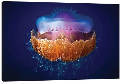 Fried Egg Jellyfish Canvas Art Print