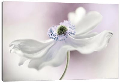 Anemone Breeze Canvas Art Print