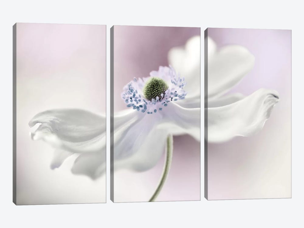 Anemone Breeze by Mandy Disher 3-piece Canvas Wall Art