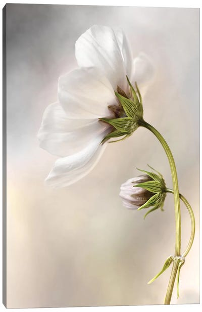 Cosmos III Canvas Art Print